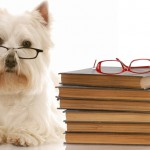 http://www.dreamstime.com/stock-photo-dog-obedience-school-image10398630